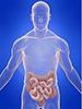 intestino200